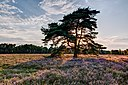 Haltern am See, Westruper Heide -- 2015 -- 7965-9.jpg