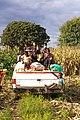 Harvest In A Pandemic.jpg