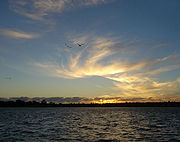 Hauraki Gulf Sunset With Birds.jpg