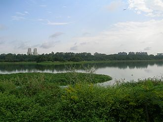 Lakes in Bangalore - Many lakes in Bangalore are filled with weeds. View of the Hebbal lake before restoration