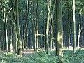 Hens Wood - geograph.org.uk - 262091.jpg