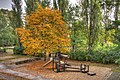 Herbst in Marzahn - panoramio (1).jpg