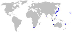 Sixgill stingray - Image: Hexatrygon bickelli rangemap