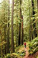 Hiker on Deception Creek Trail, Willamette National Forest (34079846923).jpg