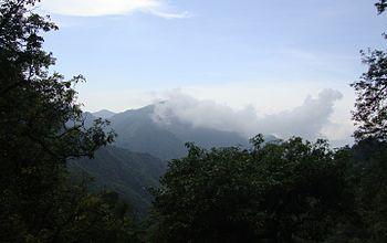 Hills through the trees.jpg
