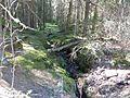 Hinterzartener Moor 1130063.jpg