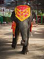 Historic City of Ayutthaya - Decorative Elephant.jpg