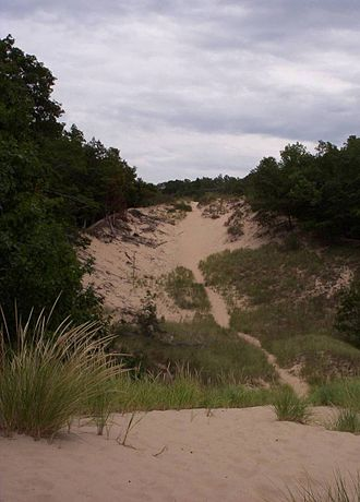 Hoffmaster State Park - Parabolic dune with damage to dune grass  on unauthorized trail in center of photograph