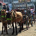 Horses with Carriage at Agrabad (03).jpg