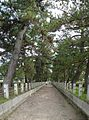 Horyuji temple , 法隆寺 - panoramio (4).jpg