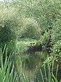 Howden Marsh - geograph.org.uk - 472847.jpg