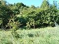 Hulyaihorodok, Cherkas'ka oblast, Ukraine, 20740 - panoramio (4).jpg