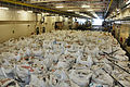 Humanitarian Supplies are Delivered to Haiti from the UK MOD 45151170.jpg
