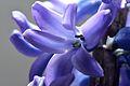 Hyacinthus orientalis Blüte 01.JPG