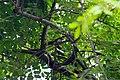 IMG 7766 นกน้อยในป่าใหญ่ Photographed by Peak Hora.jpg