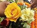 IMG flower HDR.jpg