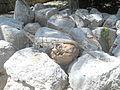 Iguana a Uxmal 2.JPG