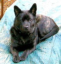 Image of Kai (dog).jpg
