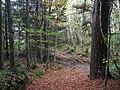 In Humbie Wood. - geograph.org.uk - 73529.jpg