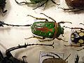 Insect Safari - beetle 38.jpg