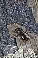 Insekten Verschlüsse- 2019 by-RaBoe 080.jpg