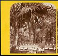Inside the Palm House, Kew Gardens, 1860s - stereoview (8598259999).jpg