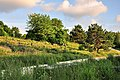 Irchelpark 2010-06-18 20-18-42.JPG