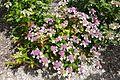 Japanese garden @ Fort d'Issy-les-Moulineaux (35075480616).jpg