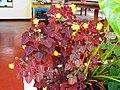 Jardim Village do Dendê, Gamboa do Morro,Cairu - Anna Maria Innocenzi -N° 25 florzinhas amarela.jpg