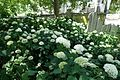 Jardin Atlantique @ Gare Montparnasse @ Paris (34897728490).jpg