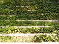 Jardines de Sabatini, escalera, Madrid, España, 2015.JPG