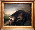John james audubon, londra intrappolata (lontra canadese), 1927-30.jpg