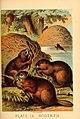 Johnson's household book of nature (Plate LV) (7268690426).jpg
