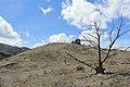 Jumbo Grade Trail - panoramio (7).jpg