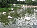 Jurong BirdPark 133.JPG