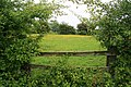Just over the Fence - geograph.org.uk - 837567.jpg