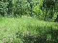 Kaniv Nature Reserve (May 2018) 64.jpg