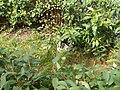 Katter (6061858291).jpg