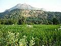 Kava, Palakkad - panoramio (5).jpg