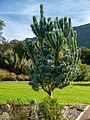 Kirstenbosch National Botanical Garden, Cape Town ( 1060046).jpg