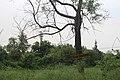 Koshi Tappu Wildlife Reserve (1).jpg