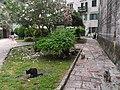 Kotor - koty są wszędzie - panoramio.jpg