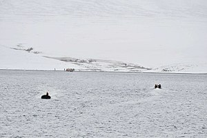 Komsomolets Island - Image: Krenkel Bucht 1 2014 08 31