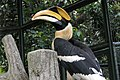 Kuala Lumpur Bird Park, Hornbill.jpg
