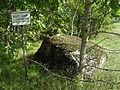 Kultusekivi, Mustmätta küla Lääne (1), 2011, regnr 9070.jpg