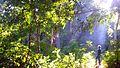 Kundujhar waterfall,malaygiri hills.jpg