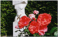 LÖRRACH...GRÜTTPARK...Roses - panoramio.jpg