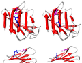 LMNA protein (1IFR) mutation R527L PMID 22549407.png