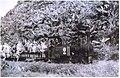 La Decauville transportant des marins, Poulo-Condore en 1948, Album de Jacques Brulé, capitaine de la Légion étrangère, directeur de Poulo-Condore, Collection Gérard O'Connell.jpg