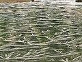 Lago Culimo - panoramio.jpg